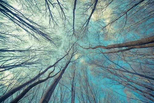 Fototapeta las, magiczny las, powiększająca wnętrze, sypialnia, salon, drzewa
