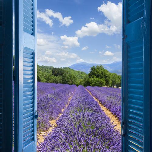 Fototapeta widok z okna, lawenda, góry, lazurowe wybrzeże, niebieskie okiennice