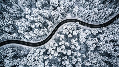 Tapeta las zimą, drzewa, śnieg, droga przez las, widok z lotu ptaka